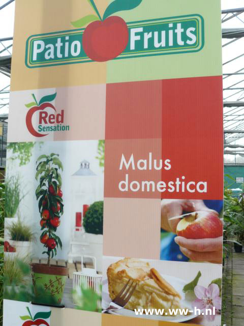 Malus domestica Red, Yellow en Green Sensation 12,99
